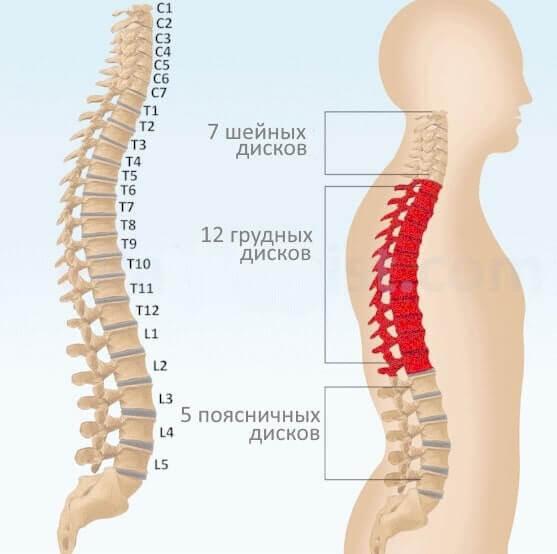Народные методы лечения компрессионного перелома позвоночника