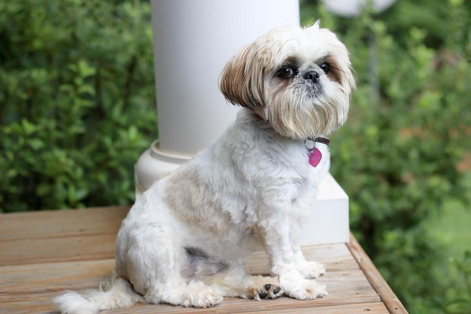 Болезни старых собак - какие заболевания бывают у пожилых собак - Royal Canin